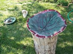Make Stepping Stones from Rhubarb Leaves