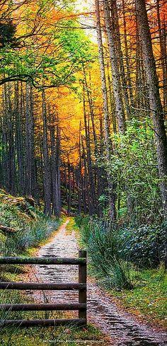 Elan Valley, Wales, UK