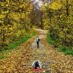 AUTUMN COLORS @irinanedelescu  Sony A6000 + 16-50 1/160 sec. f/5.6 49mm  ISO:1250 RAW + LIGHTROOM  #sonya6000 #sonyalpha6000 #sonycamera #nature #naturelover #naturephotography #landscapephotography #landscape #romaniapitoreasca #discoverromania #romania #promovezromania #padurileromaniei #muntiicarpati #photooftheday #instaphotos #colors #sonyalphaclub #earthescope #sigmaart #sony1650mm #lightroom #photography #forest #autumnfalls Landscape Photography, Nature Photography, Z Ro, Sony A6000, Sony Camera, Romania, Lightroom, Country Roads, Autumn