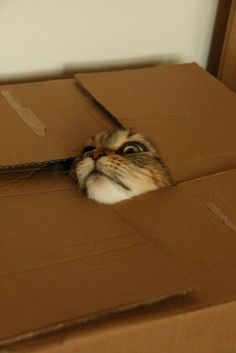 When shipping a cat, be sure to provide an adequate window.