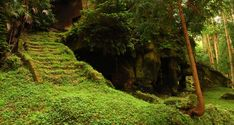 Purchase Forest Stairs Ruin Backdrop Nature Landscape Photography Background Green Grass Tree Kid Adult Artistic Portrait Spring Scenic Photo S from Andrea Marcias on OpenSky. Share and compare all Electronics. 2560x1440 Wallpaper, Forest Wallpaper, Spring Tree, Images Google, All Nature, Japan Photo, Stairway To Heaven, To Infinity And Beyond, Landscape Photos