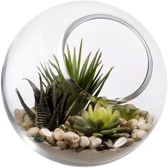 Home Essentials Glass Terrarium Bowl () (€18) ❤ liked on Polyvore featuring home, home decor, plants, fillers, decor, extras, glass bowl, glass home decor and glass terrarium