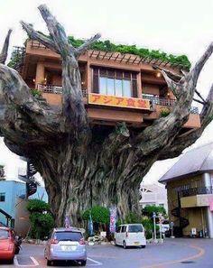 """chimycat: """" G. Restaurante en el árbol, Okinawa Japón. """""""