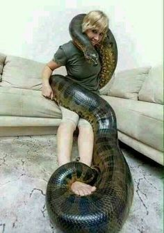 Can we keep Anaconda as pet? It seems that this anaconda can easily swallow this woman anytime Giant Anaconda, Anaconda Snake, Green Anaconda, Animals Amazing, Animals Beautiful, World's Largest Snake, World Biggest Snake, Snake Facts, Reticulated Python