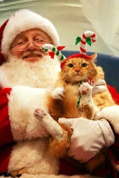Haha - I'm gonna take my cat to go see Santa this year ! She's gonna look just like that cat - angry and all !