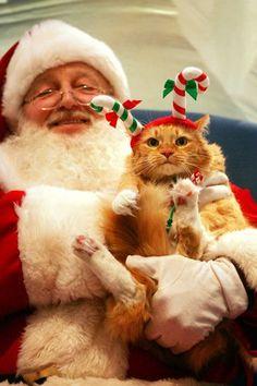 Santa and kitty