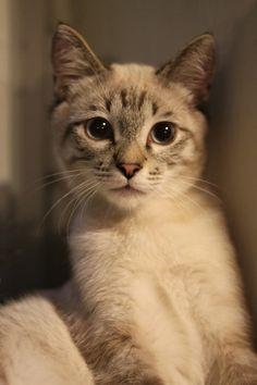 Cat Cat Cute Puppies Kittens Cute Cats Pretty Cats