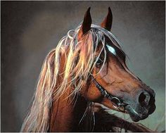 All sizes | cheval | Flickr - Photo Sharing!