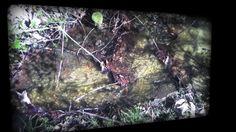 Musique du petit ruisseau des bois du Jorat by Daniel Thomas. Danse des vaguelettes, bruissement de l'eau, écouter er regarder ce petit spectacle tranquille.
