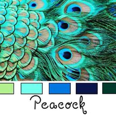 Peacock wedding inspiration - Would you rock this color palette? Peacock Color Scheme, Peacock Colors, Colour Schemes, Color Combos, Peacock Feathers, Colour Palettes, Peacock Wedding, Peacock Baby, Peacock Room