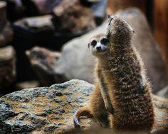 Animals In Love Pictures  - Pelfind