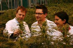 Nueva Zelanda aprueba despenalización y nueva política de drogas saludable - http://growlandia.com/marihuana/nueva-zelanda-aprueba-despenalizacion-y-nueva-politica-de-drogas-saludable/