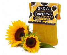 This sunflower in a bag. | 27 Things That'll Definitely, Maybe Get You Through The Cold
