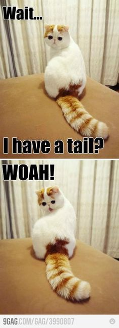 i have a tail?