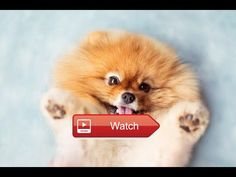 Funny And Cute Animals Videos Compilation  Funny And Cute Animals Videos Compilation Include Funny Videos Dogs and Cats Funny Video Animal Funny Videos Babies and more  on Pet Lovers