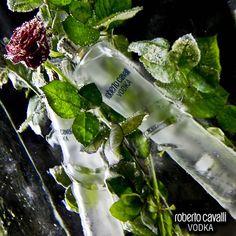Roberto Cavalli Vodka, Red Rose Passion…