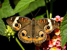 Google Image Result for http://2.bp.blogspot.com/_SFUDGKjecJo/TRM4dt5A-eI/AAAAAAAAACw/Jag82X7BU1Y/s400/butterfly10.jpg