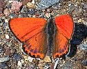 Photo Gallery - The Butterfly WebSite - butterfly photos, butterfly photography, caterpillar pictures, butterfly pictures and more!