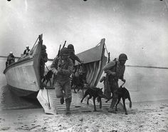 War dogs practice amphibious landings from a Higgins boat at Camp Lejeune, North Carolina, ca. 1943. (OFFICIAL USMC PHOTOGRAPH) ( Marine Corps Archives & Special Collections)