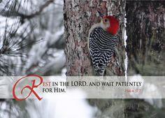 00010-000006-RedBelliedWoodpecker-cropped