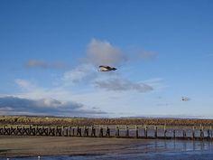 Looking across Warkworth harbour by Dave Clark #northeasthour
