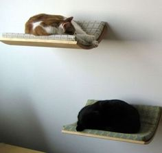 Would kitty bed shelves turn into doggy stairs..??? Hmm This could be a bad idea..lol
