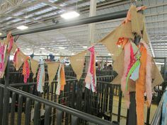 Next year County Fair Decorations, Horse Stall Decorations, Fair Day, Fun Fair, Show Cows, Show Horses, Lidl, Sheep Pen, Horse Ribbons