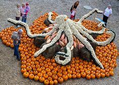 An octopus made out of pumpkins