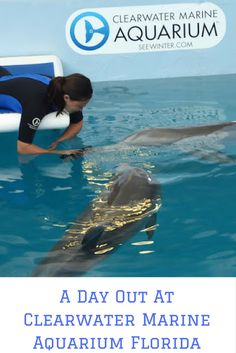 A Day Out At Clearwater Marine Aquarium | The Diary Of A Jewellery Lover