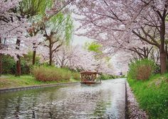 In the south of Kyoto is the quaint Fushimi sake district. It's famous for it's sake breweries and beautiful historic buildings.  It's especially beautiful in the Spring when you can also get a boat ride along these cherry blossom lined canals.