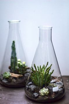 Lab Flasks - Hermetica London Different idea for wedding favors. They have small Erlenmeyer Flasks and you could put different plants in them.