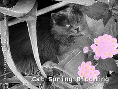Cat in blooming