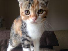 İran kedisinin minik yavruları