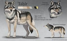 be/fyspfTZbTTM A design/low quality standard reference commission from of their wolf character Tahir! He's based off of a mexican/gray wolf cross. I LOVE mexican wolves! Wolf Character, Character Design, Pet Wolf, Wolf Sketch, Creepypasta Cute, Dog Artwork, Anime Wolf, Cute Animal Drawings, Creature Design