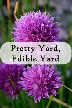 Using edible landscaping means you can have a pretty yard full of edible plants.  Here are some of my favorite edible landscaping ideas and sources of inspiration!