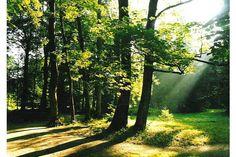 Betliar - Park 5