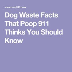 Dog Waste Facts That Poop 911 Thinks You Should Know