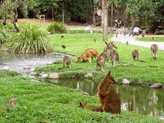 The Wildlife Habitat - Port Douglas