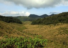 forests plains - Google Search