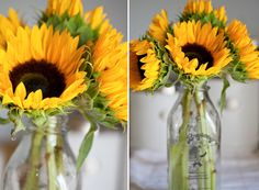 Sunflowers in an old-fashioned milk bottle