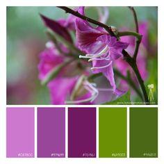 Flowering tree. #purple, #green, flowers, blossoms, #color scheme, #color palette, #photography