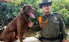 O cão com a cabeça a prêmio por cartel de drogas