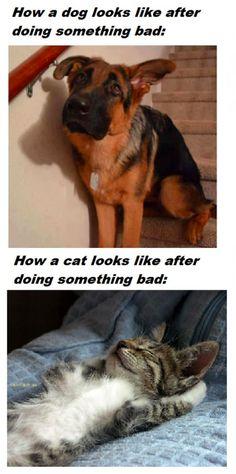 Dogs versus Cats!