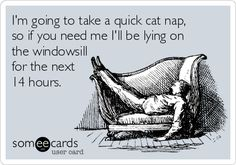 I'm going to take a quick cat nap, so if you need me I'll be lying on the windowsill for the next 14 hours.