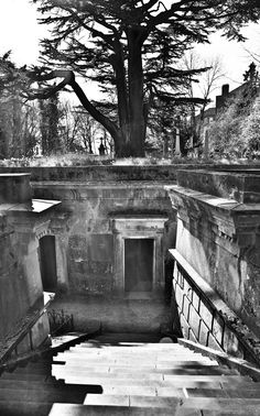 Circle of Lebanon, Highgate Cemetary  inspiration for #DragonsKiss book two of the #DragonFate novels, a series of #paranormalromances #PNR featuring #dragonshifters by #DeborahCooke
