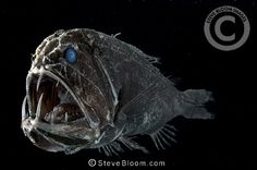 Into The Deep: an underwater photography exhibition in Edinburgh presented by Steve Bloom Images. Fishing Photography, Underwater Photography, Steve Bloom, Ugly Animals, Ugliest Animals, Deep Sea Creatures, Photography Exhibition, Deep Sea Fishing, Colorful Animals