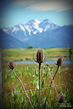 "Ronan, Montana ""Mission Mountains"" .... Montana's secret!"