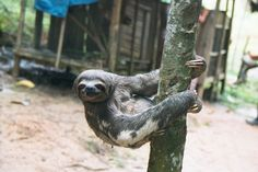 My animal personality is a sloth.. At first I was a bit bothered but after reading the description-- I'm a proud sloth