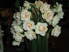 Simplesmente fantástico,paraíso das flores
