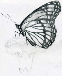 How to Draw a Butterfly drawing Sitting on Flower in Pencil ...